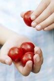 Ragazza che mangia i pomodori Fotografia Stock Libera da Diritti