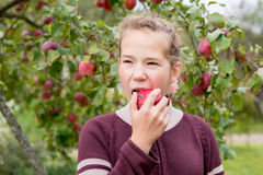 Ragazza che mangia mela Immagini Stock