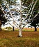 Ragazza che pende dall'albero cammuffato nel bianco immagini stock libere da diritti