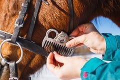 Ragazza che pettina la criniera nera del cavallo con un pettine fotografie stock libere da diritti