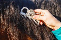 Ragazza che pettina la criniera nera del cavallo con un pettine fotografia stock libera da diritti
