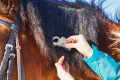 Ragazza che pettina la criniera nera del cavallo con un pettine immagini stock