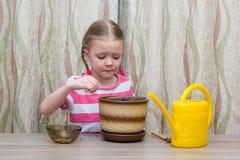 Ragazza che pianta i semi in un vaso alla tavola Immagini Stock