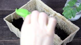 Ragazza che pianta i semi in una scatola per le piantine Giardinaggio Strumenti di giardino e un vaso della pianta su una tavola  video d archivio