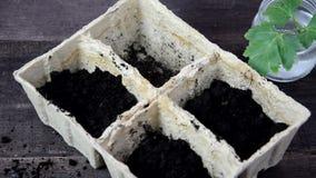 Ragazza che pianta i semi in una scatola per le piantine Giardinaggio Strumenti di giardino e un vaso della pianta su una tavola  archivi video