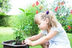 Ragazza che pianta una pianta fotografie stock