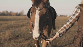 Ragazza che prende sulla passeggiata il suo cavallo scuro dalle redini su alba Camminare equestre equino del cavallo archivi video