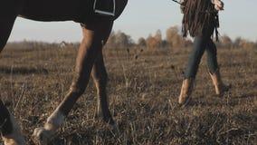 Ragazza che prende sulla passeggiata il suo cavallo scuro dalle redini su alba r stock footage