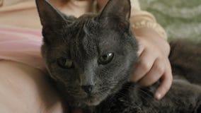 Ragazza che segna un primo piano grigio del gatto archivi video