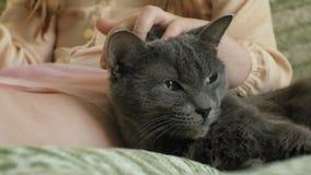 Ragazza che segna un primo piano grigio del gatto stock footage