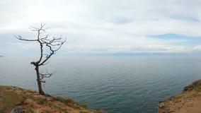 Ragazza che si siede su un albero dal mare archivi video