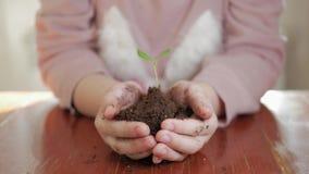 Ragazza che tiene giovane pianta verde in mani Concetto e simbolo di crescita, cura, proteggente la terra, ecologia stock footage
