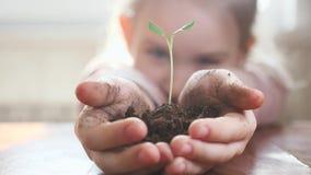 Ragazza che tiene giovane pianta verde in mani Concetto e simbolo di crescita, cura, proteggente la terra, ecologia archivi video