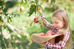 Ragazza con Apple nel meleto Bella ragazza che mangia Apple organico nel frutteto Concetto della raccolta Giardino, cibo del bamb fotografie stock libere da diritti