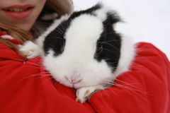 Ragazza con coniglio Fotografia Stock