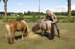 Ragazza con i cavallini di Shetland Immagine Stock Libera da Diritti