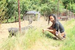 Ragazza con i maiali Fotografia Stock