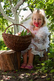 Ragazza con il canestro delle ciliege Fotografie Stock