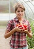 Ragazza con il pomodoro raccolto Fotografia Stock Libera da Diritti