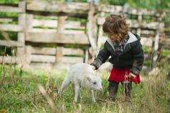 Ragazza con l'agnello sull'azienda agricola Fotografia Stock Libera da Diritti
