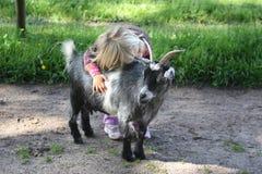 Ragazza con la capra di billy immagine stock