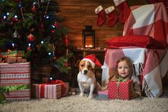 Ragazza con la presa Russel del cane più terier a casa con un albero di Natale, Fotografia Stock