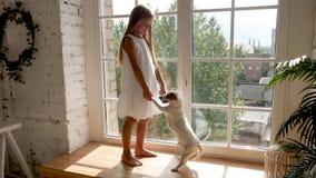 Ragazza con peli lunghi che stanno sulla finestra con un cane bianco video d archivio