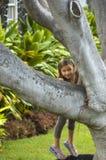 Ragazza dall'albero. immagini stock