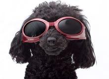 Ragazza degli occhiali di protezione Fotografie Stock Libere da Diritti