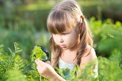 Ragazza del bambino che esamina le foglie della stoppia da parte a parte immagini stock libere da diritti
