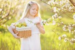 Ragazza del bambino nel giardino del fiore con il canestro delle mele Fotografia Stock Libera da Diritti