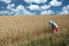 Ragazza del campo di cereale Fotografie Stock