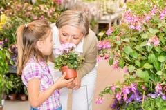 Ragazza del centro di giardino con il fiore dell'odore della nonna Immagini Stock Libere da Diritti