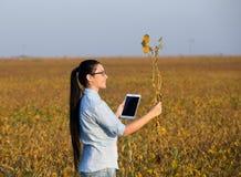 Ragazza dell'agricoltore con il gambo della soia e della compressa Fotografia Stock Libera da Diritti