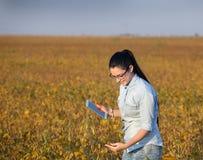 Ragazza dell'agricoltore con la compressa nel giacimento della soia Fotografia Stock