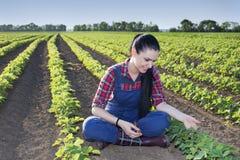 Ragazza dell'agricoltore nel giacimento della soia Fotografia Stock