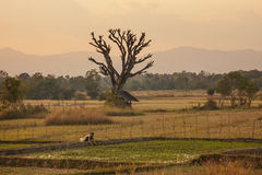 Ragazza dell'agricoltore in Tailandia del nord Immagine Stock Libera da Diritti