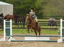 Ragazza di esposizione del cavallo fotografia stock libera da diritti