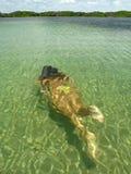 Ragazza di immersione subacquea Fotografie Stock
