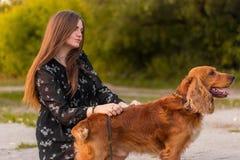 Ragazza dolce e cane che camminano nel parco di autunno Il cane è macchiato, caccia Ragazza in vestito sta preparando l'animale d fotografia stock libera da diritti