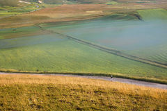 Ragazza e campi coltivati Fotografia Stock