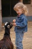 Ragazza e capre Fotografia Stock Libera da Diritti