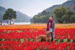 Ragazza e golden retriever nei fiori Fotografie Stock Libere da Diritti
