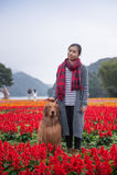 Ragazza e golden retriever nei fiori Fotografia Stock Libera da Diritti