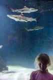 Ragazza e squalo in acquario Immagini Stock Libere da Diritti