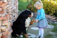 Ragazza e un cane immagine stock libera da diritti