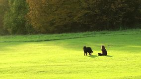 Ragazza e un cane nel parco