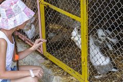Ragazza e un coniglio in una gabbia fotografia stock libera da diritti
