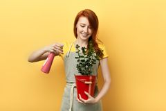 Ragazza felice dello zenzero che pulisce le foglie verdi del fiore con lo spruzzo d'acqua fotografia stock libera da diritti
