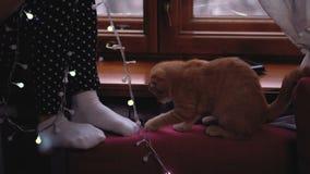 Ragazza, gattino e Natale stock footage